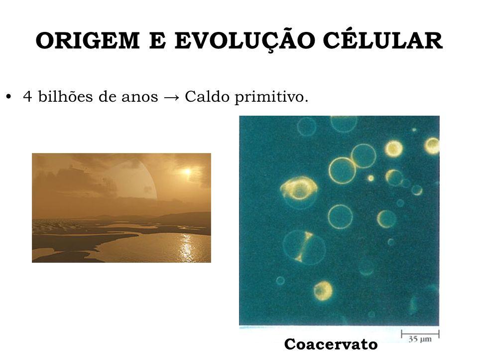ORIGEM E EVOLUÇÃO CÉLULAR