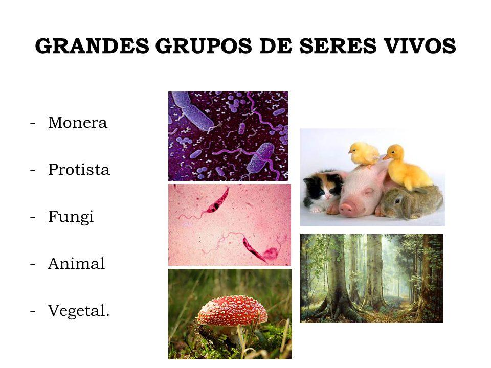 GRANDES GRUPOS DE SERES VIVOS