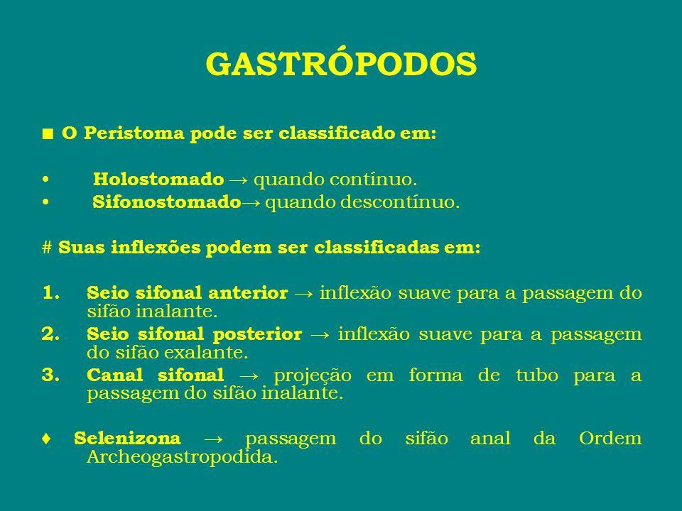 GASTRÓPODOS ■ O Peristoma pode ser classificado em: