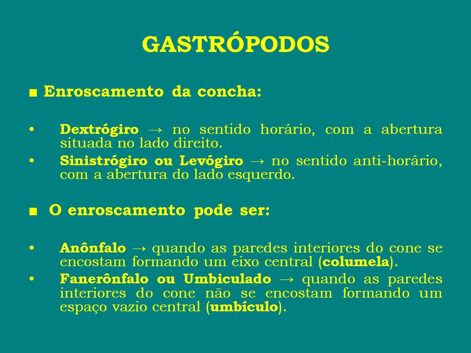 GASTRÓPODOS ■ Enroscamento da concha: ■ O enroscamento pode ser: