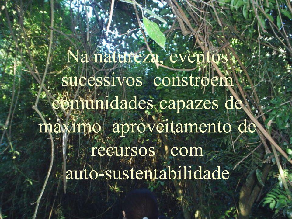 Na natureza, eventos sucessivos constroem comunidades capazes de máximo aproveitamento de recursos com auto-sustentabilidade