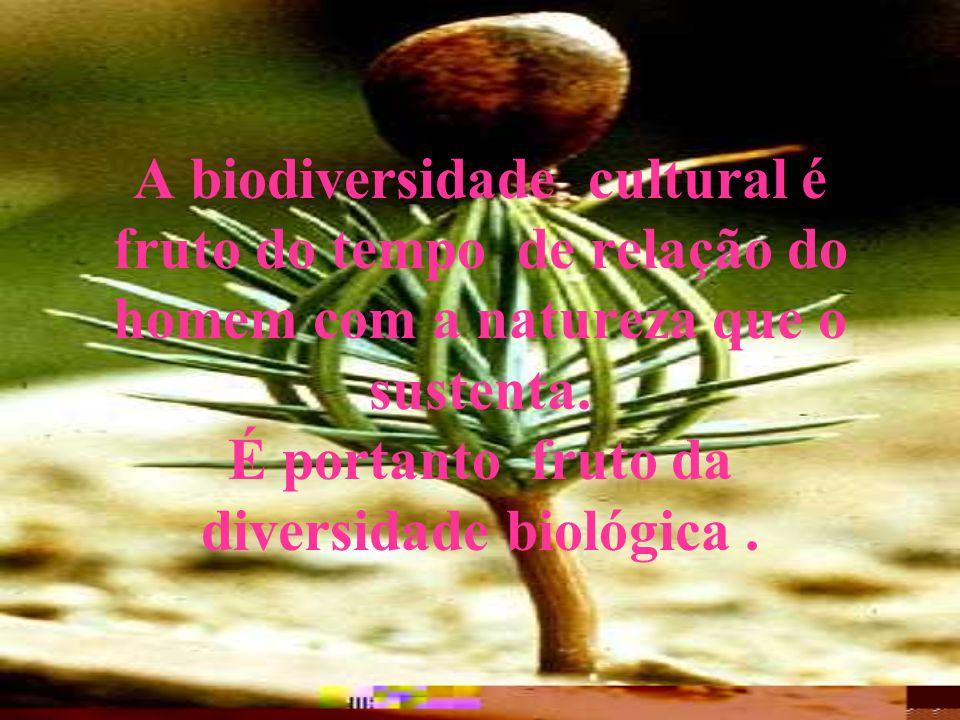 A biodiversidade cultural é fruto do tempo de relação do homem com a natureza que o sustenta.