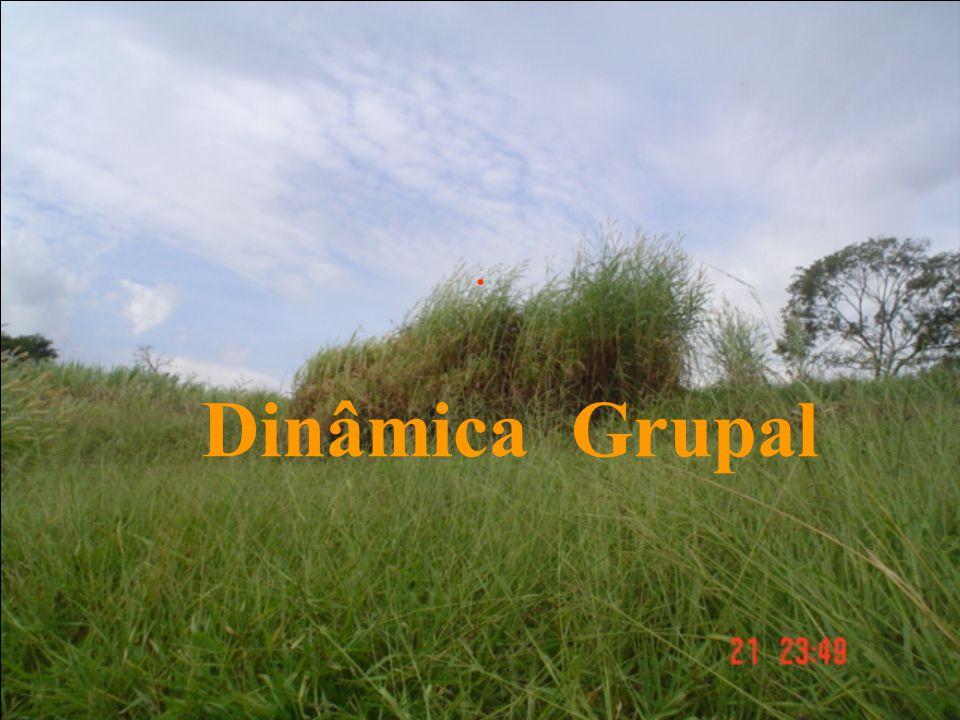 . Dinâmica Grupal