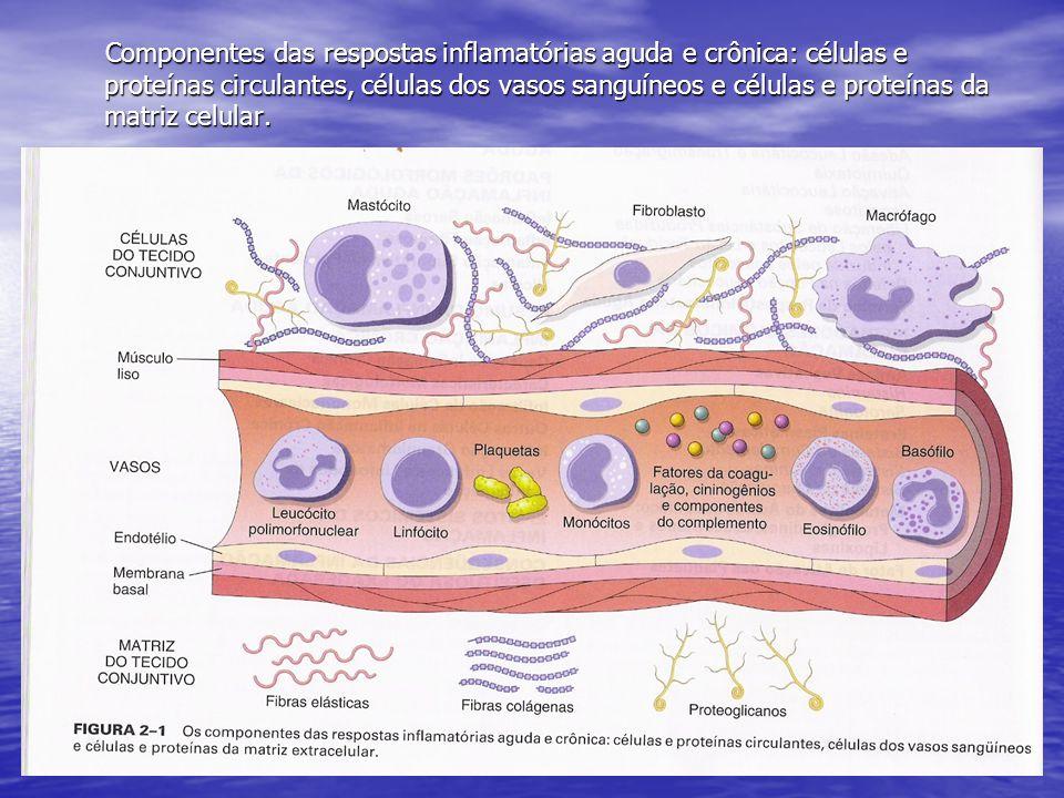 Componentes das respostas inflamatórias aguda e crônica: células e proteínas circulantes, células dos vasos sanguíneos e células e proteínas da matriz celular.