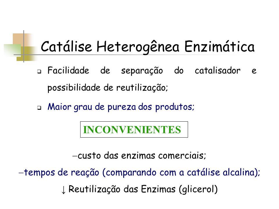 Catálise Heterogênea Enzimática