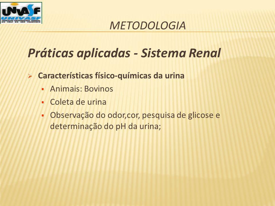 Práticas aplicadas - Sistema Renal