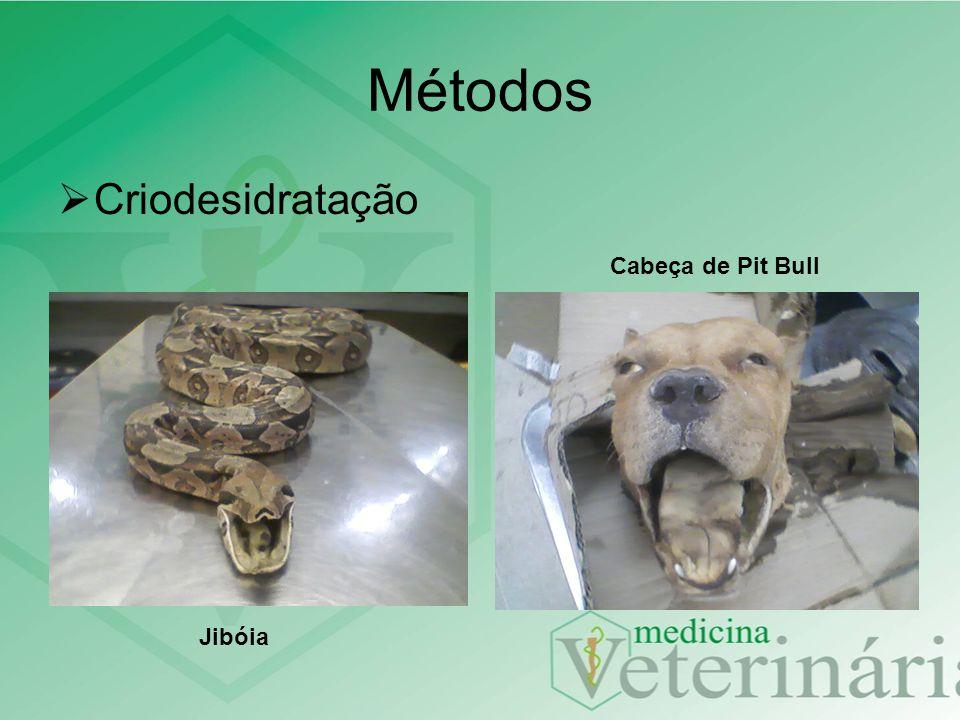 Métodos Criodesidratação Cabeça de Pit Bull Jibóia