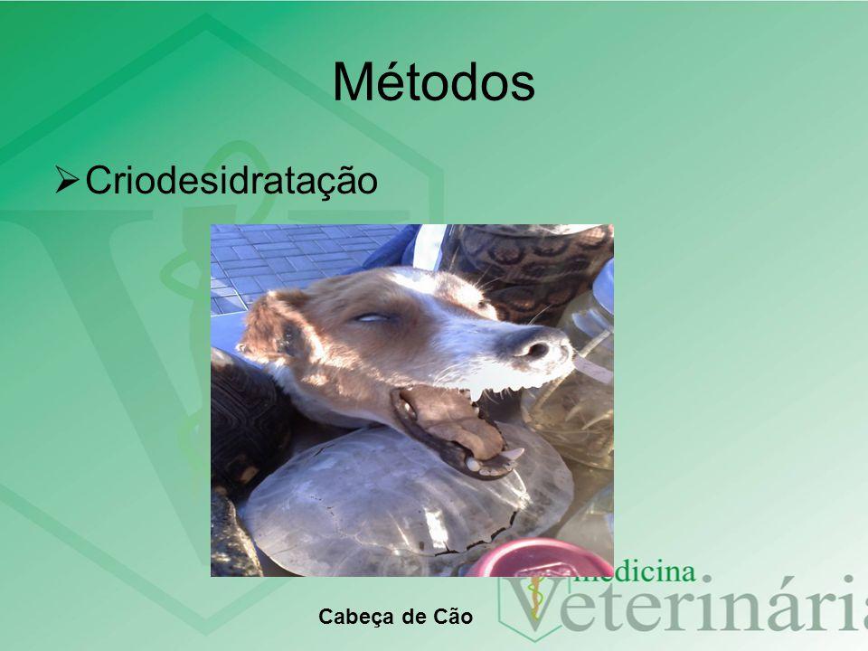 Métodos Criodesidratação Cabeça de Cão
