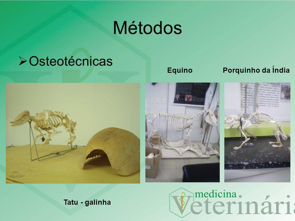 Métodos Osteotécnicas Equino Porquinho da Índia Tatu - galinha