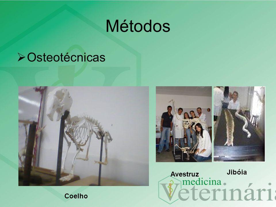 Métodos Osteotécnicas Jibóia Avestruz Coelho