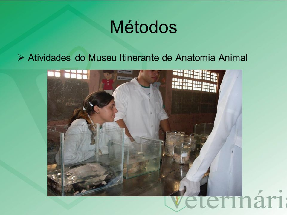 Métodos Atividades do Museu Itinerante de Anatomia Animal
