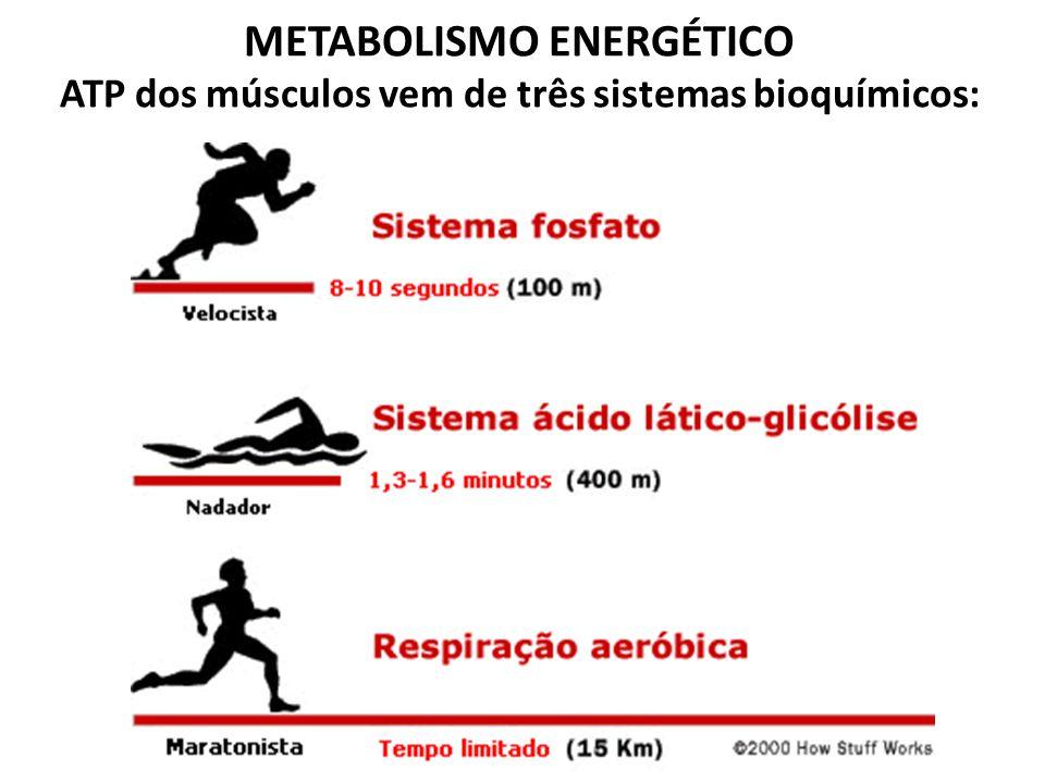 METABOLISMO ENERGÉTICO ATP dos músculos vem de três sistemas bioquímicos: