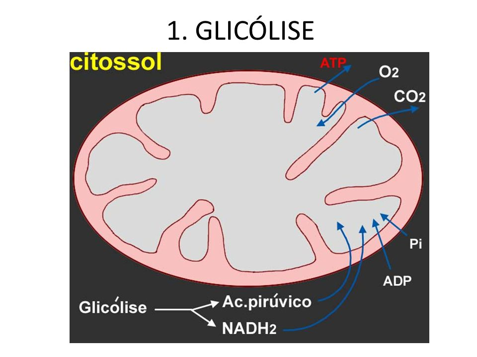 1. GLICÓLISE