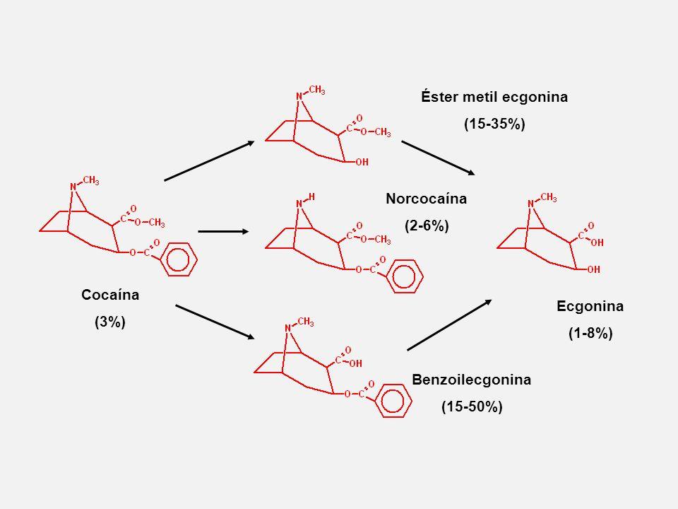 Éster metil ecgonina (15-35%) Cocaína. (3%) Norcocaína. (2-6%) Ecgonina. (1-8%) Benzoilecgonina.