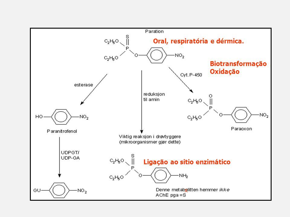 x Oral, respiratória e dérmica. Biotransformação Oxidação