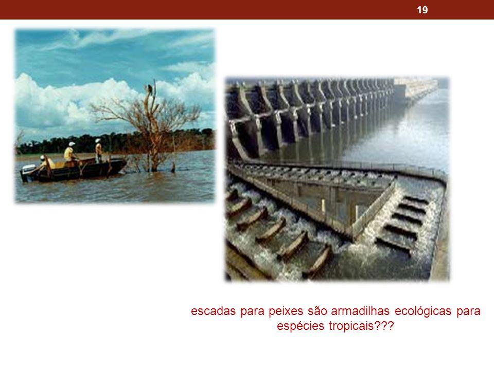 escadas para peixes são armadilhas ecológicas para espécies tropicais