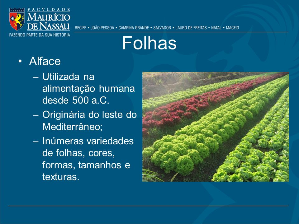 Folhas Alface Utilizada na alimentação humana desde 500 a.C.