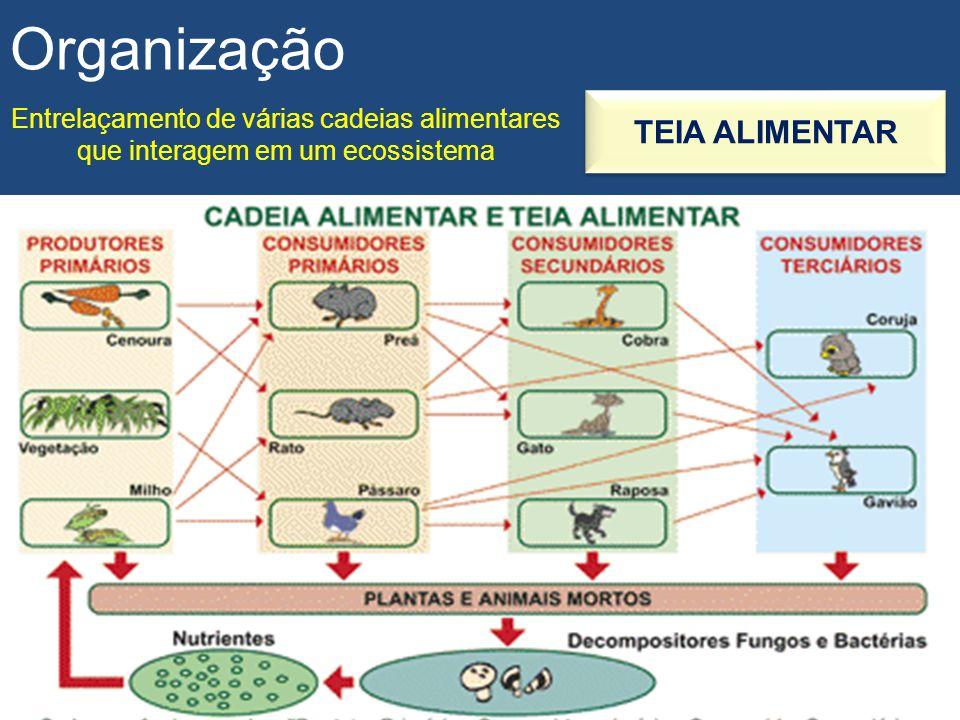 Organização TEIA ALIMENTAR