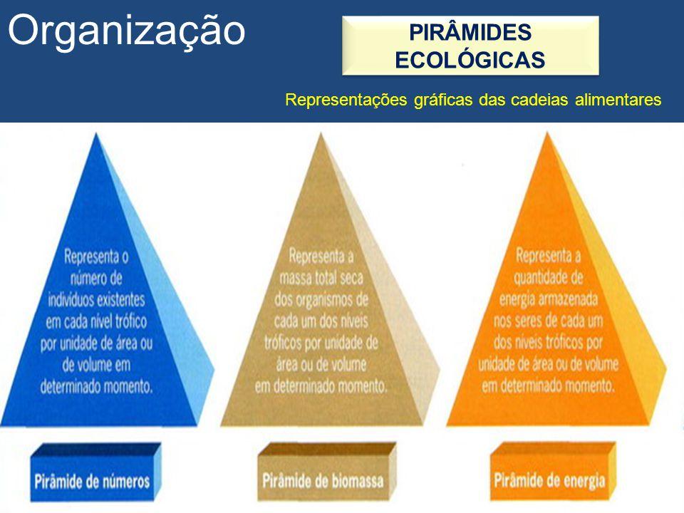 Organização PIRÂMIDES ECOLÓGICAS