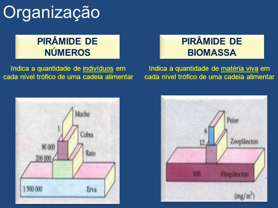 Organização PIRÂMIDE DE NÚMEROS PIRÂMIDE DE BIOMASSA