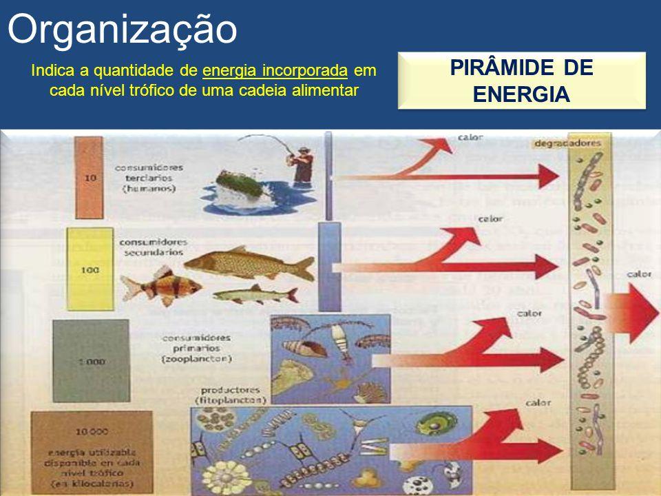Organização PIRÂMIDE DE ENERGIA