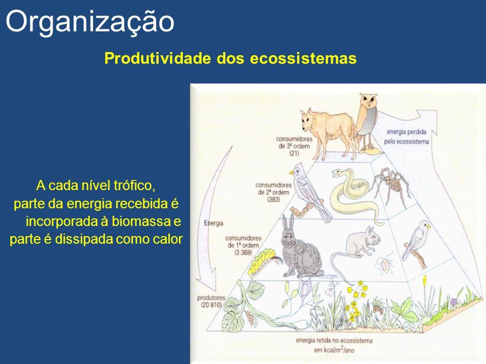 Produtividade dos ecossistemas