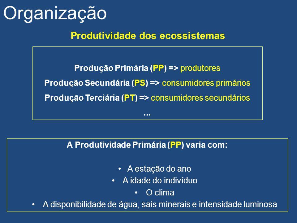 Organização Produtividade dos ecossistemas