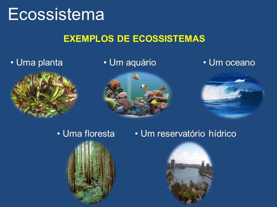 Ecossistema EXEMPLOS DE ECOSSISTEMAS Uma planta Um aquário Um oceano
