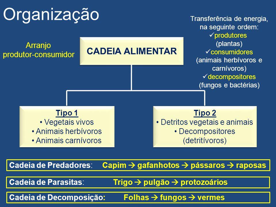 Organização CADEIA ALIMENTAR Arranjo produtor-consumidor Tipo 1
