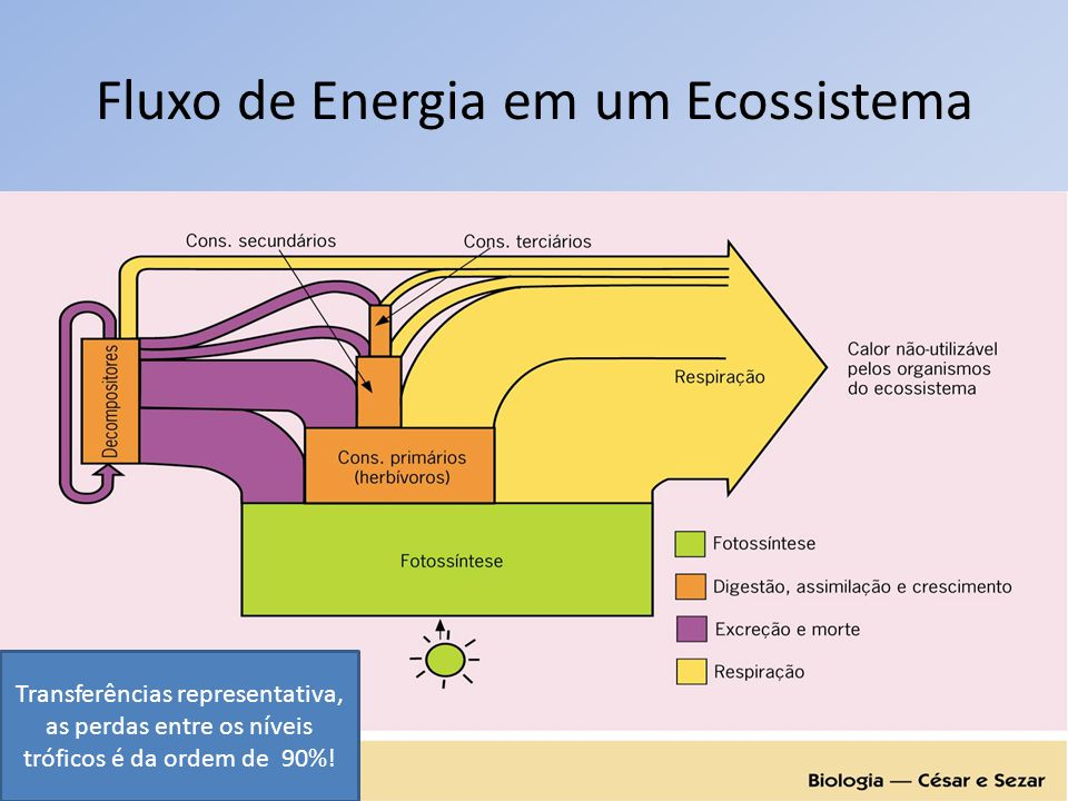 Fluxo de Energia em um Ecossistema