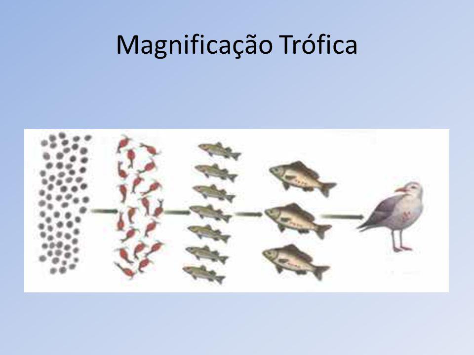 Magnificação Trófica