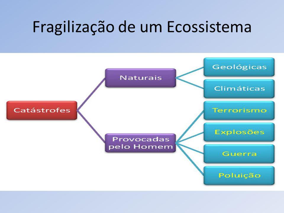 Fragilização de um Ecossistema