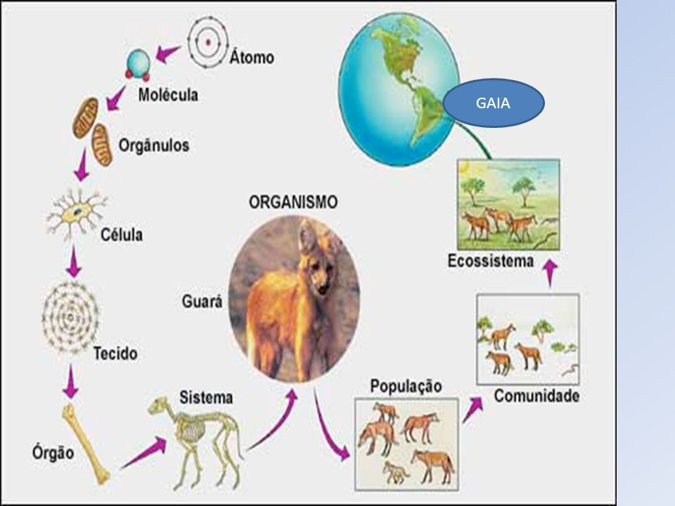 Hipótese de Gaia GAIA.