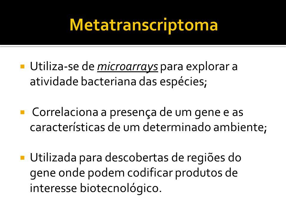 Metatranscriptoma Utiliza-se de microarrays para explorar a atividade bacteriana das espécies;