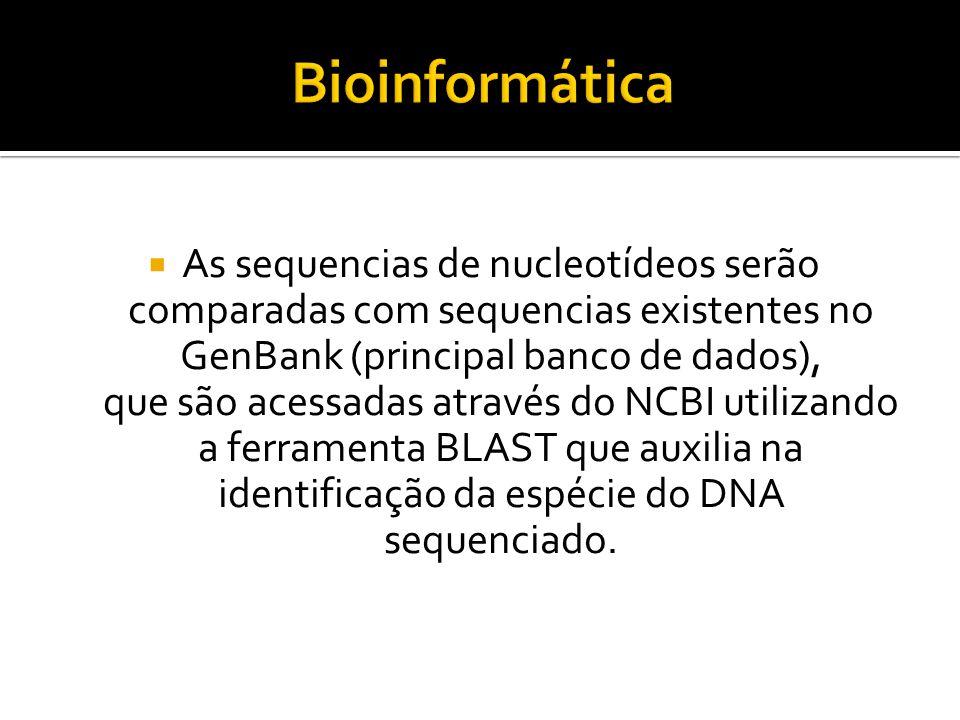 Bioinformática As sequencias de nucleotídeos serão comparadas com sequencias existentes no GenBank (principal banco de dados),