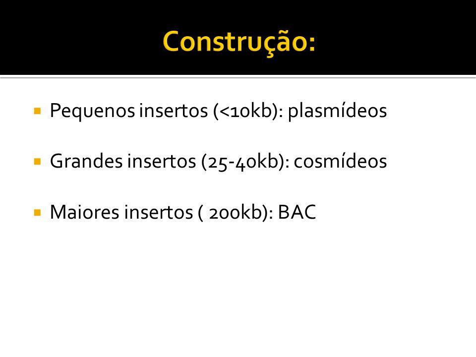 Construção: Pequenos insertos (<10kb): plasmídeos