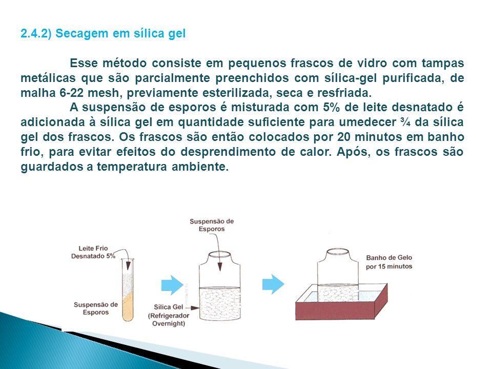 2.4.2) Secagem em sílica gel
