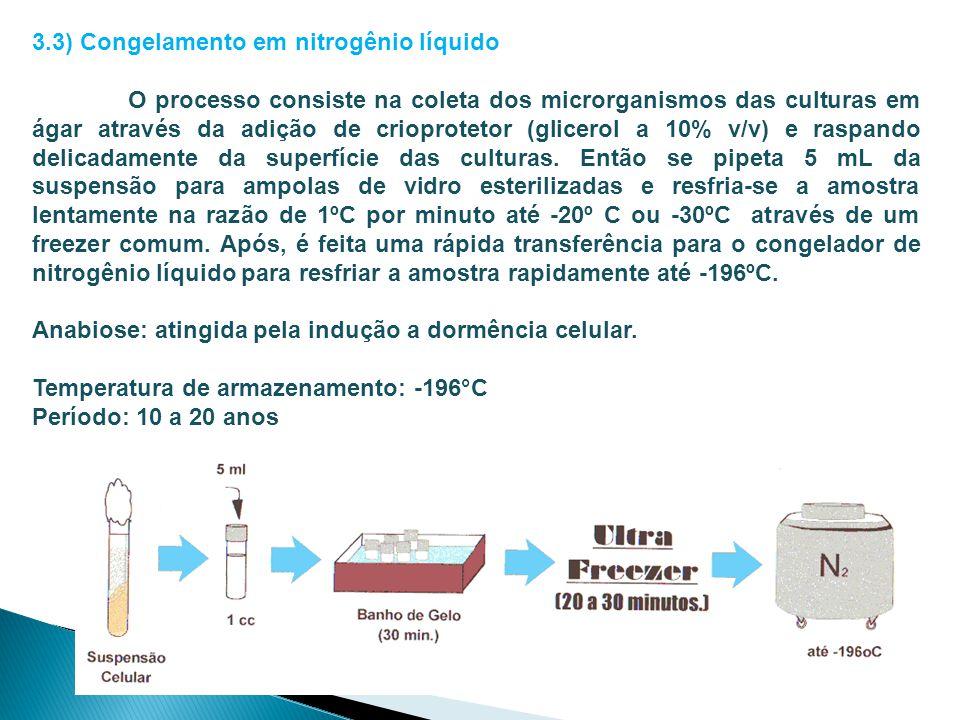 3.3) Congelamento em nitrogênio líquido