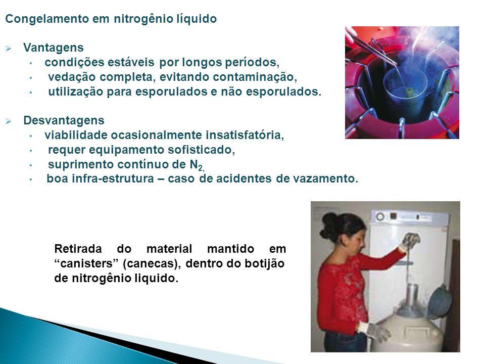 Congelamento em nitrogênio líquido
