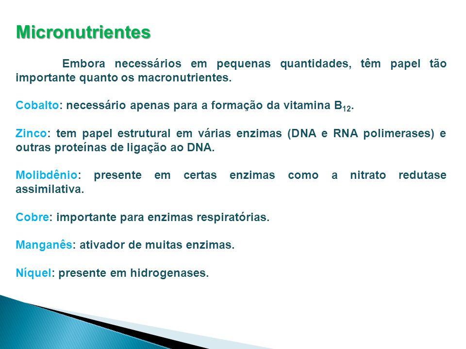 Micronutrientes Embora necessários em pequenas quantidades, têm papel tão importante quanto os macronutrientes.