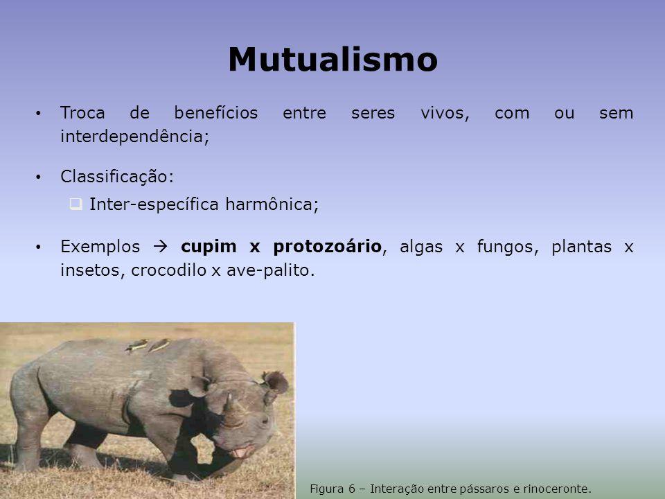 Figura 6 – Interação entre pássaros e rinoceronte.