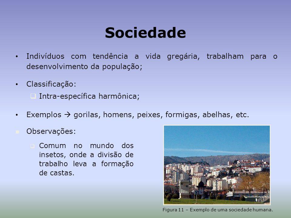 Figura 11 – Exemplo de uma sociedade humana.