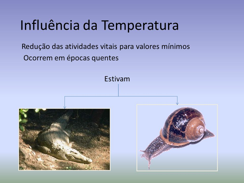 Influência da Temperatura