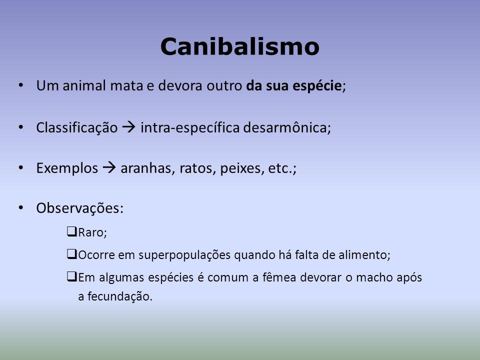 Canibalismo Um animal mata e devora outro da sua espécie;