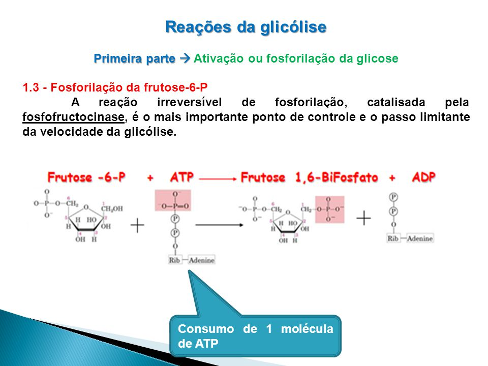 Primeira parte  Ativação ou fosforilação da glicose