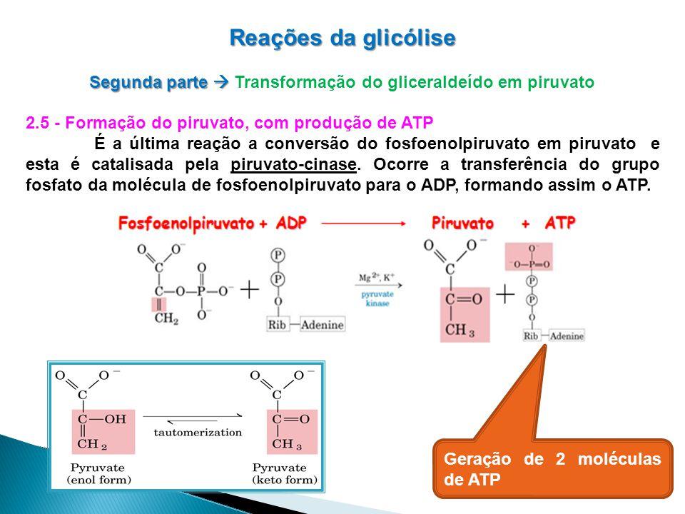 Segunda parte  Transformação do gliceraldeído em piruvato