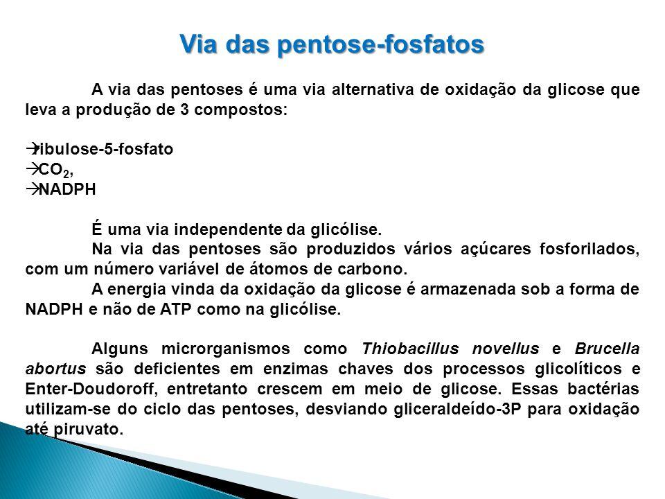 Via das pentose-fosfatos