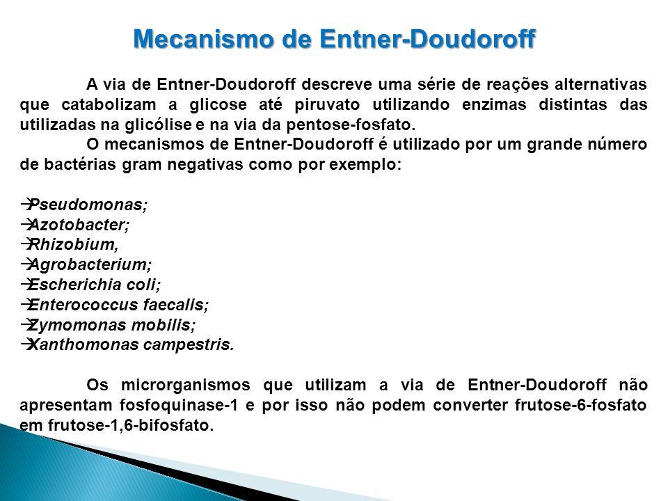 Mecanismo de Entner-Doudoroff