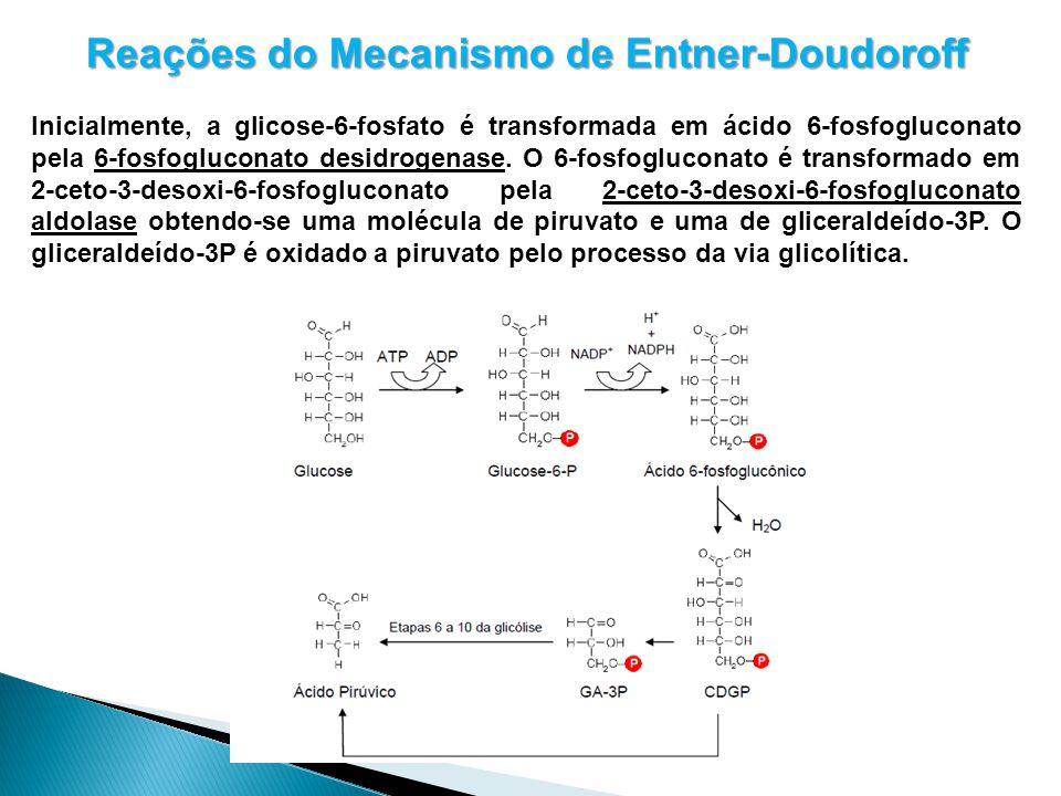 Reações do Mecanismo de Entner-Doudoroff