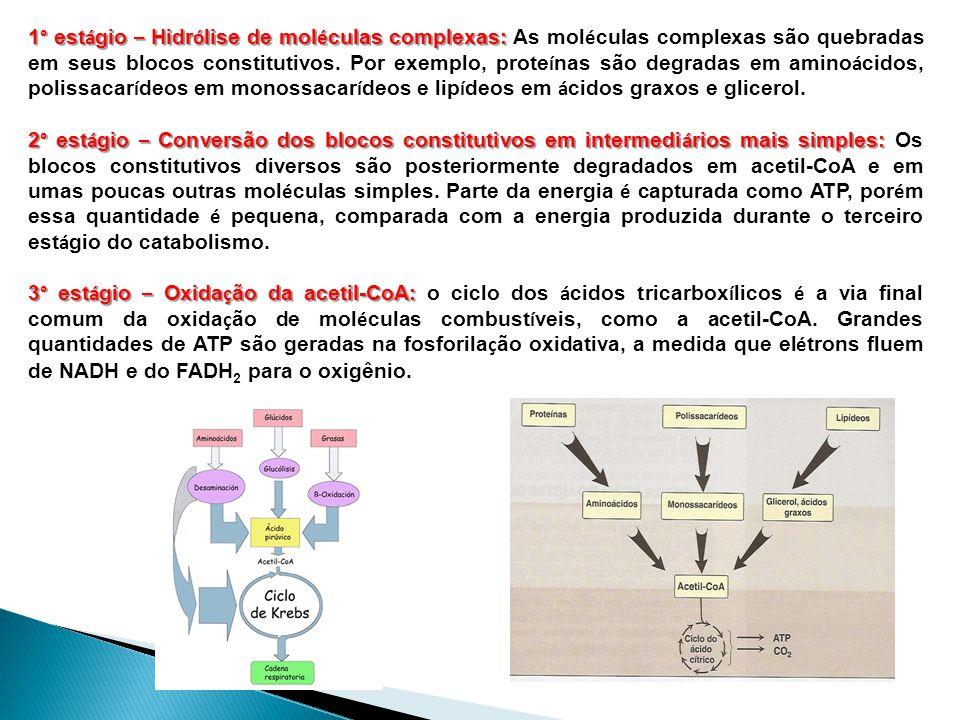 1° estágio – Hidrólise de moléculas complexas: As moléculas complexas são quebradas em seus blocos constitutivos. Por exemplo, proteínas são degradas em aminoácidos, polissacarídeos em monossacarídeos e lipídeos em ácidos graxos e glicerol.